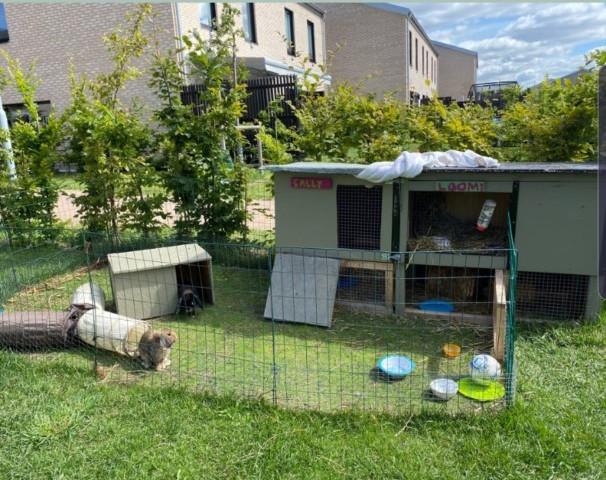 Här är 2 burar som blivit 1 större bur där kaninerna bor ihop