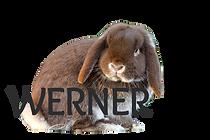 werner2_edited.png