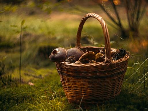 Začala houbařská sezóna: Jak se neztratit v lese