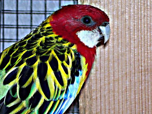 Výstava okrasného ptactva, morčat, terarijních zvířat