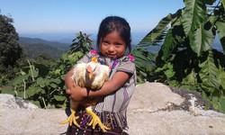 NP chicken photo