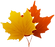 png-clipart-canada-maple-leaf-maple-leaf-s-maple-leaf_edited.png