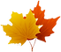 png-clipart-canada-maple-leaf-maple-leaf-s-maple-leaf_edited_edited.png