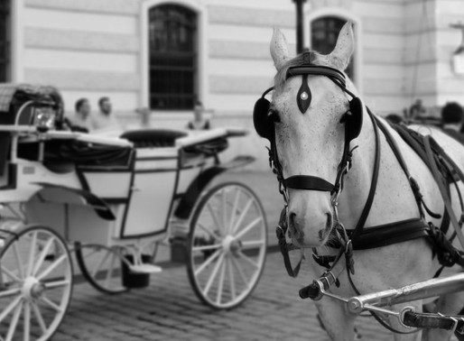 Prague could be set to ban horse carriage rides