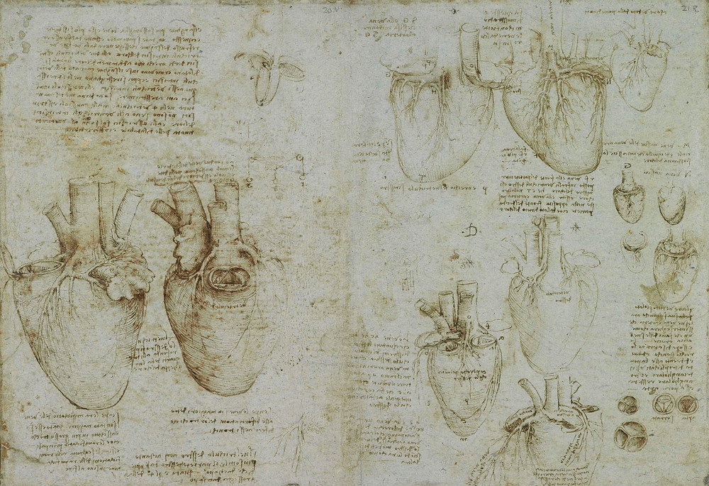 Leonardo da Vinci, The heart and coronary vessels, c.1511-13. Royal Collection Trust/(c) Her Majesty Queen Elizabeth II 2019