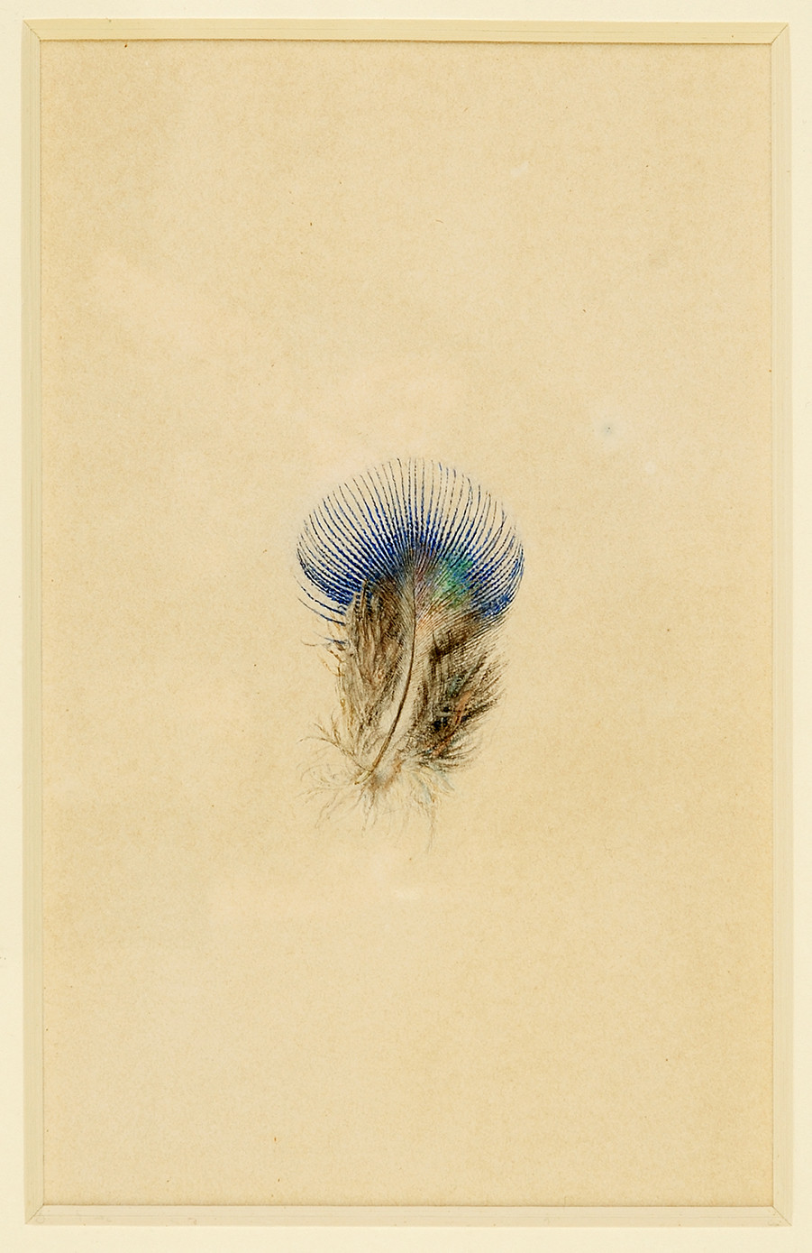 Sketch by John Ruskin of a peacock's feather