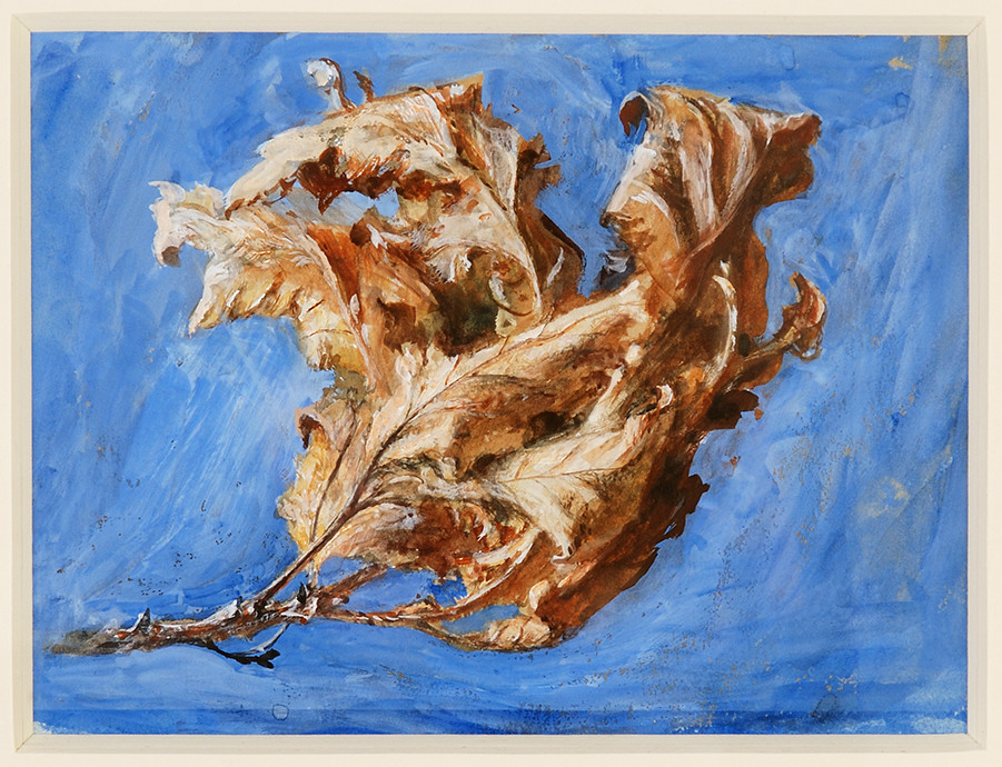 Painting by John Ruskin of old oak leaves