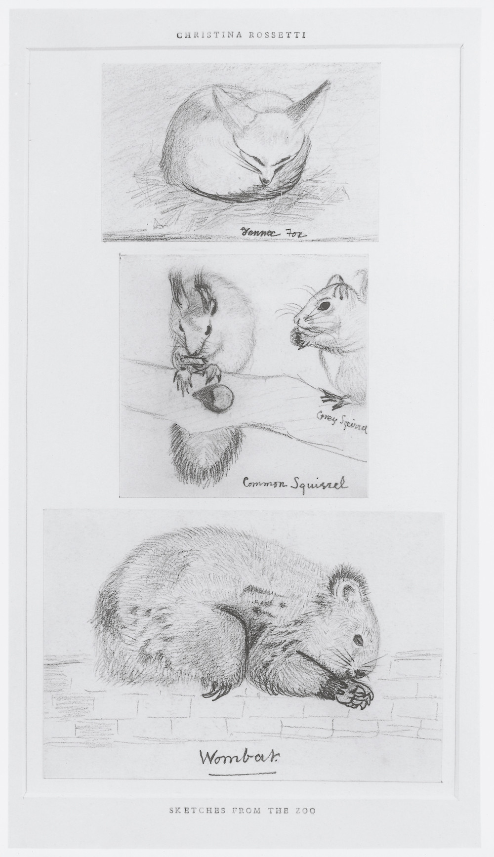 sketch of animals including squirrels and wombat