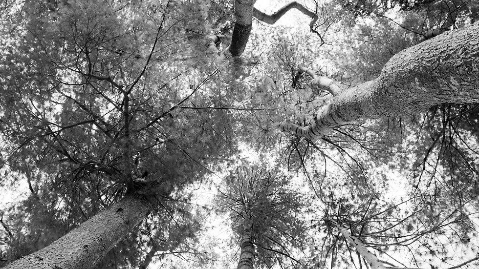 ArmBalance Trees.jpg