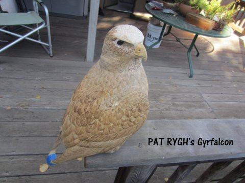 Pat's gyrfalcon.jpg