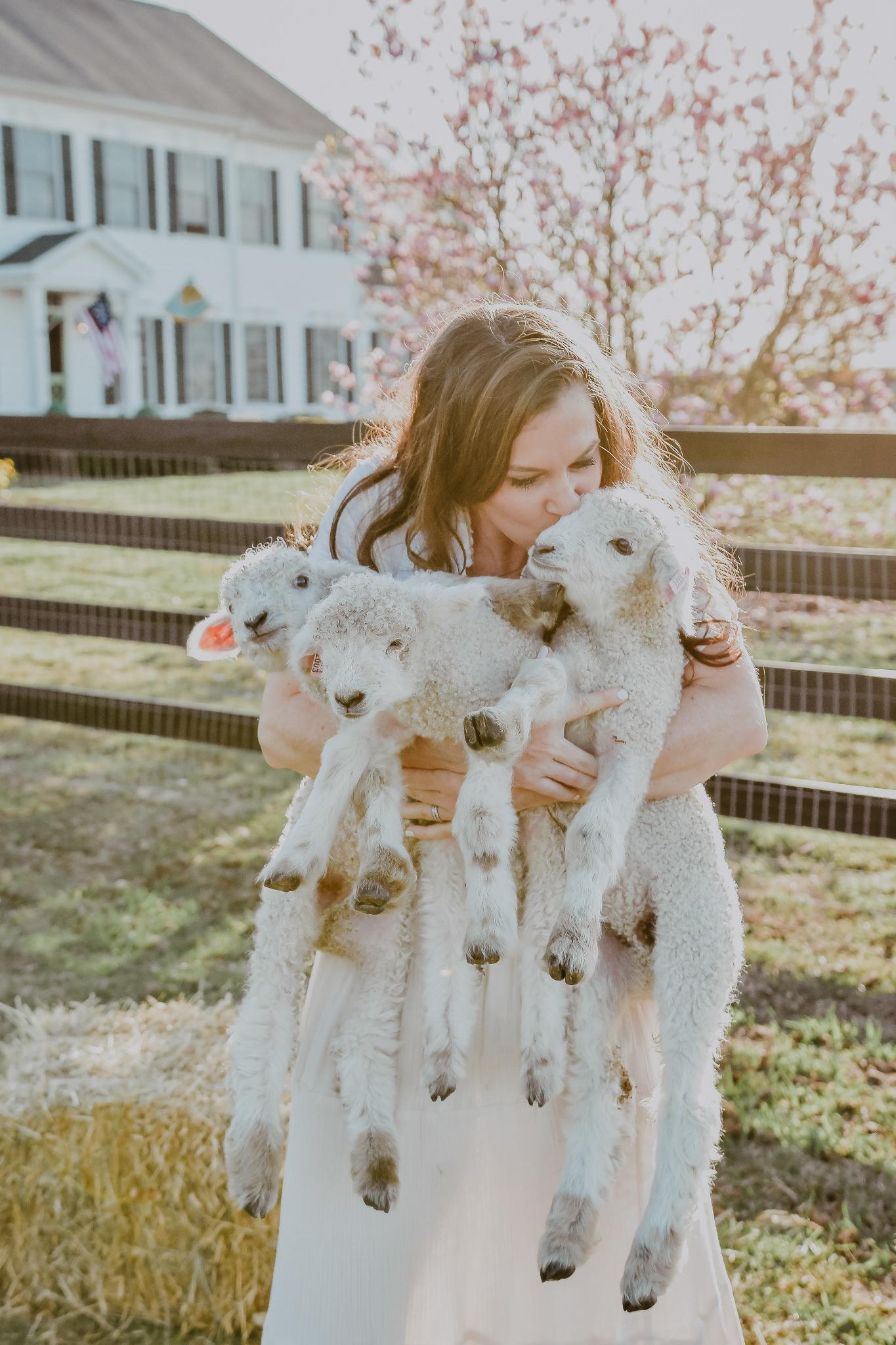 lamb-14