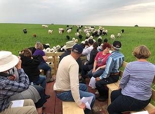 cows_on_hilltop.jpg