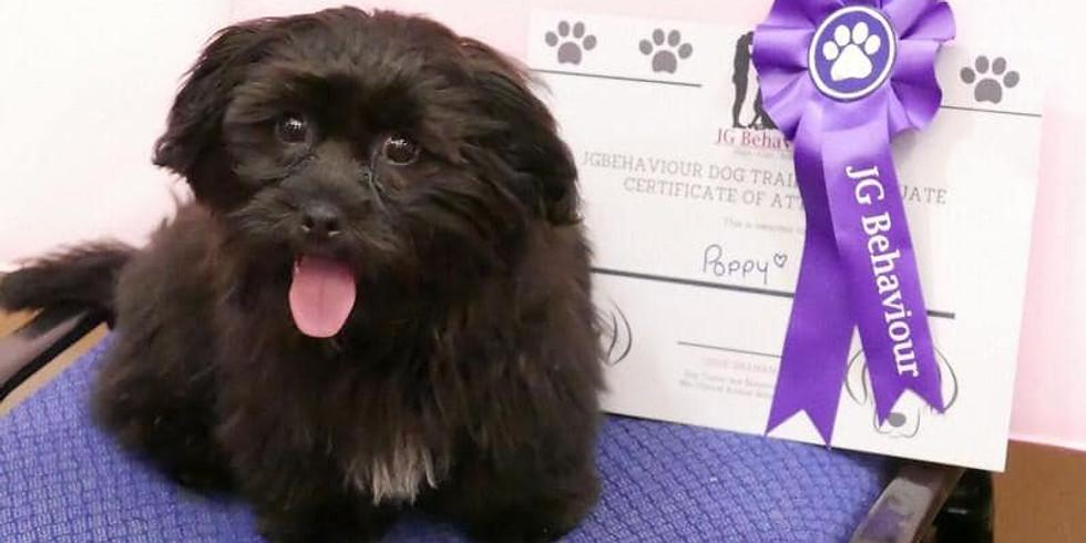 Puppy Life Skills Classes