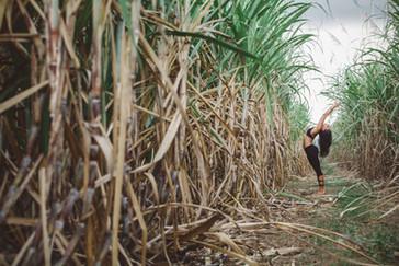 Kama Yoga - Sugarcane 10.jpg