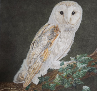'Barn Owl'