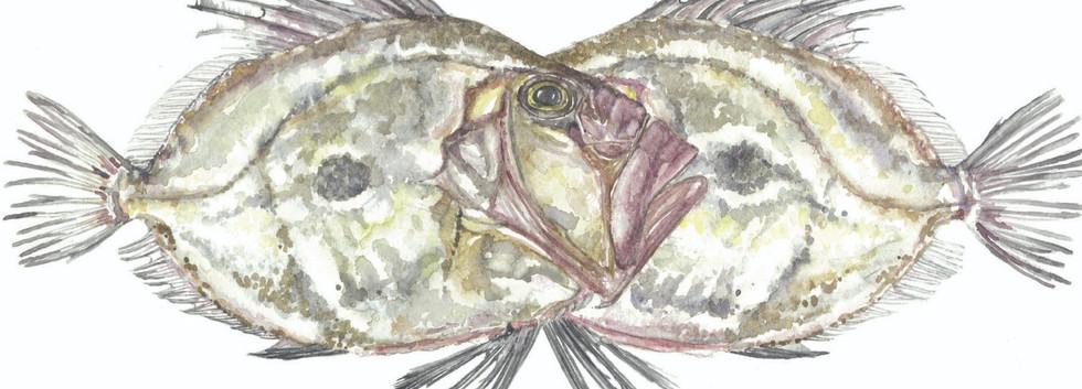 'Mirror fish'