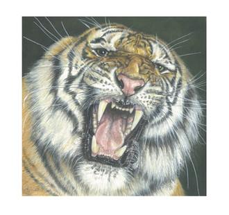 'Tigress'