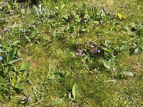 lawn 01.jpeg