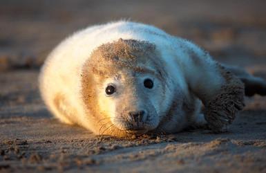 Seal1.jpg