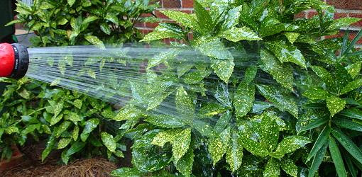 ask-julie-watering-plant-foliage-1.jpg