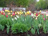 spring-bulbs.jpg