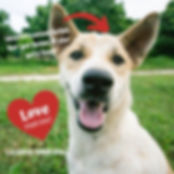 love your dog license your dog.jpg