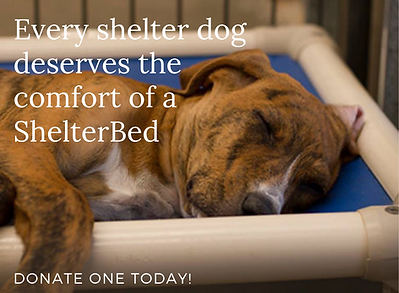 shelter bed_edited.png