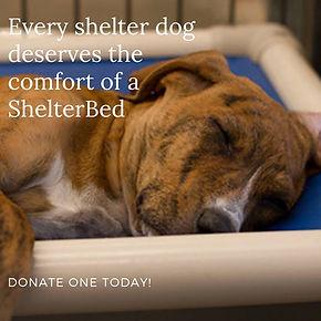 shelter bed.jpg