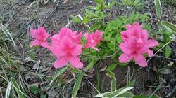 敷地内で咲く花