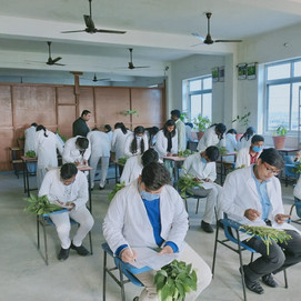 BAMS 2nd Year Practical Dravyaguna Vigyan Jeevak Ayurved Medical College