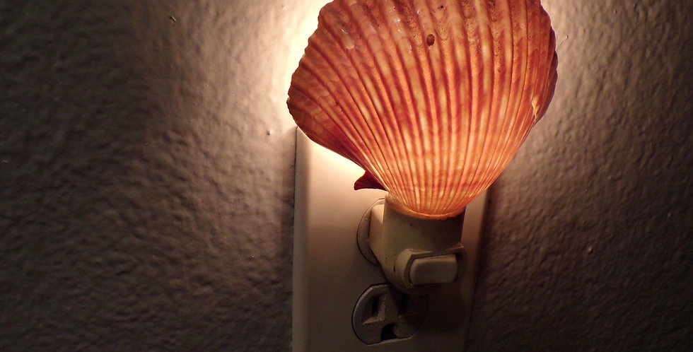 Gold Cup Shell light