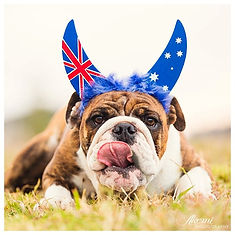 Aus Day Dog.jpg