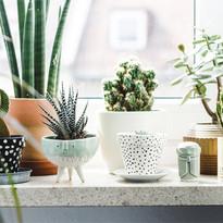 10 cách bố trí cây xanh trong nhà độc đáo