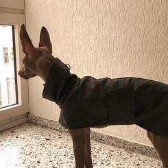 Hector mit schwarzem Regenmantel