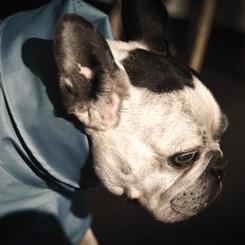 Dougie mit blauem Regenmantel