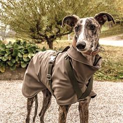 Stella mit grauem Softshell-Mantel