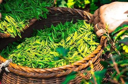 tea-1309015_640.jpg