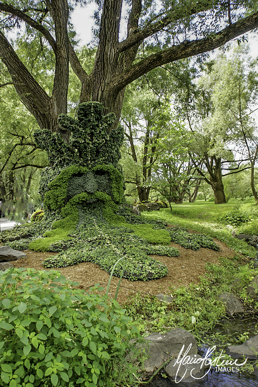 Roi de la Forêt