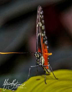 Papillons en Fête