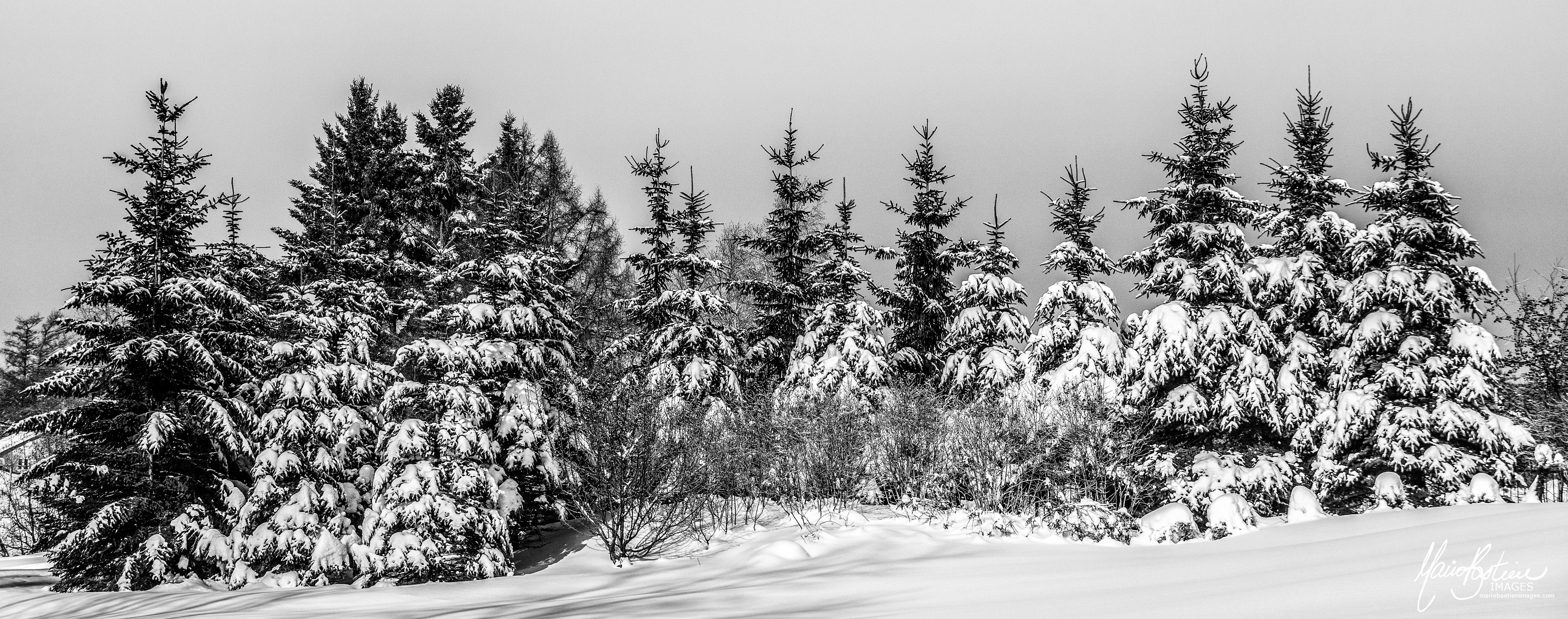 Manteaux Blancs