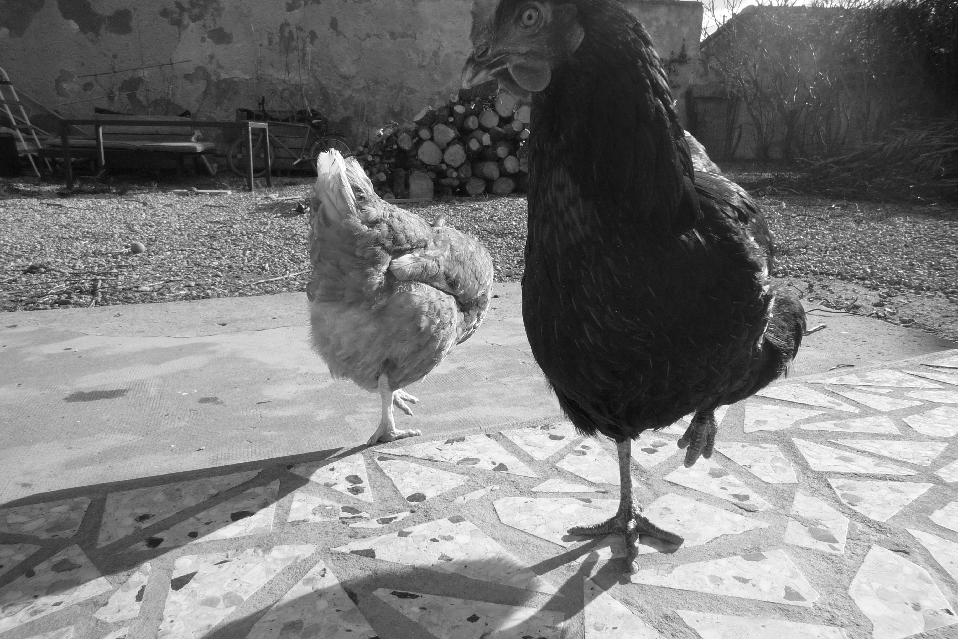 Lola et Réglisse