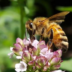 Bees6_edited