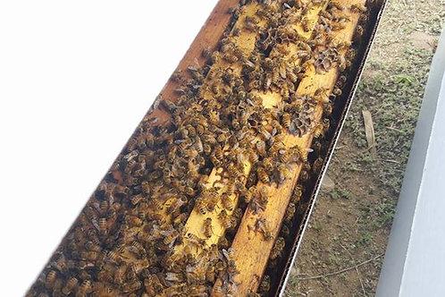 Spring Nucleus Bee Colony 2020!!