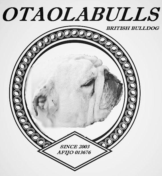 Otaolabulls, criador bulldog ingles madrid