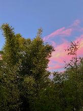 Balcooa bamboo at sunset