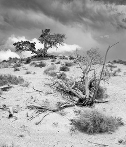 Cycle of Life, Junipers, Monument Valley