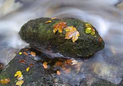 Autumn Leaves on Boulder
