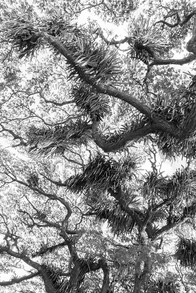 Living Canopy