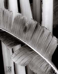 Palm leaf, Inspired by P. Jones