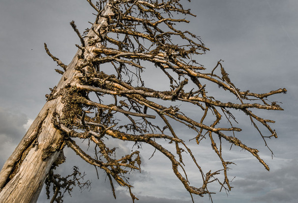 Dead Tree, Ötscher